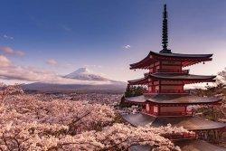 Stratowulkan Fudżi Kwiat Wiśni Japonia - plakat