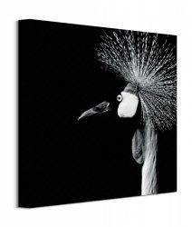 Balearica Regulorum - obraz na płótnie
