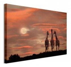 Moonrise Giraffes - obraz na płótnie