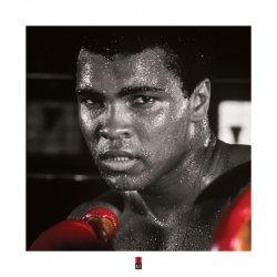 Muhammad Ali (Rękawice bokserskie) - reprodukcja