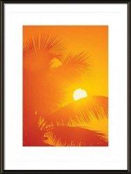 Pomarańczowe palmy - obraz w ramie