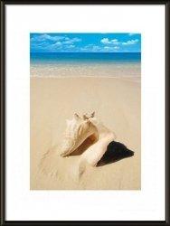 Obraz w ramie - Muszla na plaży