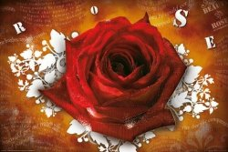 Róża (teksty) - plakat