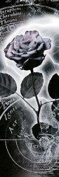 Merkury (róża) - plakat
