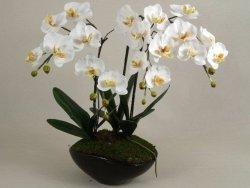 Sztuczny storczyk - Orchidea - W doniczce - 50x73cm