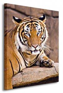 Tygrys - Obraz na płótnie